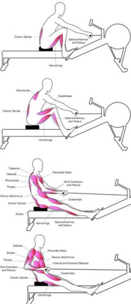 Rowing Workout Muscle Groups